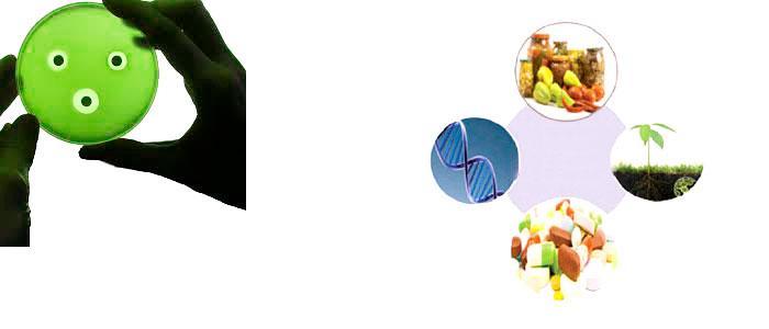 Probióticos que producen bacteriocinas