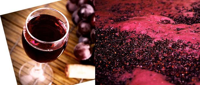 Fermentación del vino con saccharomyces cerevisiae