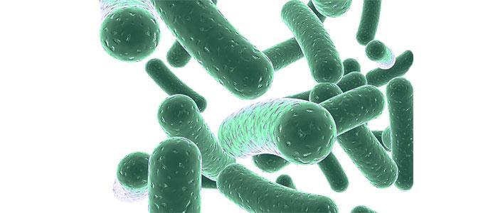 Cómo aumentar la flora intestinal