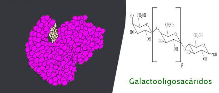 Galactooligosacáridos (GOS)