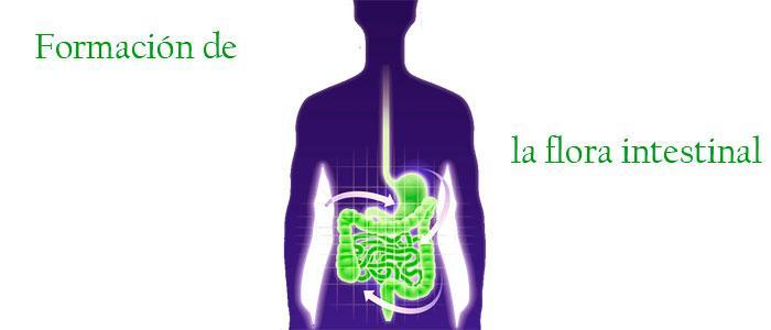 Beneficios de L. reuteri para la flora intestinal