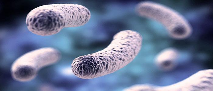 Qué es Lactobacillus acidophilus y para qué sirve