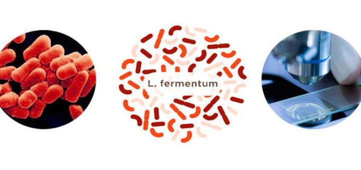 Para que sirve Lactobacillus fermentum y cuáles son los beneficios de tomarlo