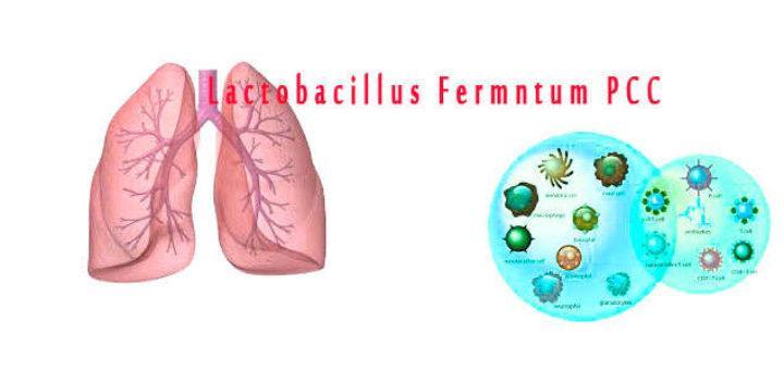 Lactobacillus fermntum PCC