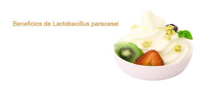 Beneficios de Lactobacillus paracasei, ¿para qué sirve?