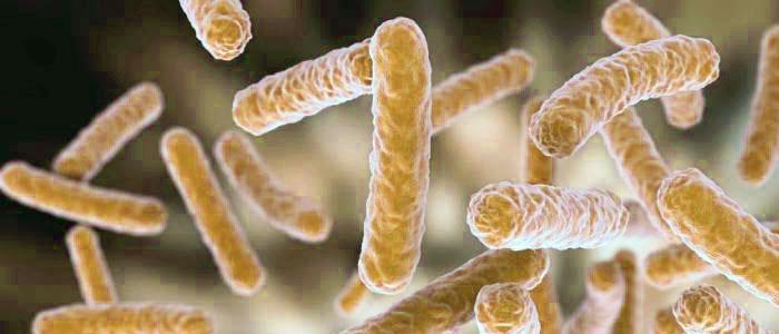 Beneficios y propiedades de Lactobacillus rhamnosus