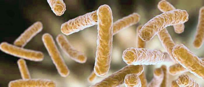 Lactobacillus rhamnosus GG, LGG, GR-1 JB-1, HN001