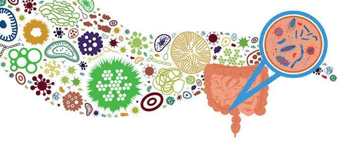 Beneficios de Lactobacillus salivarius para la flora intestinal