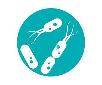 Lactobacillus spp o clases de lactobacilos