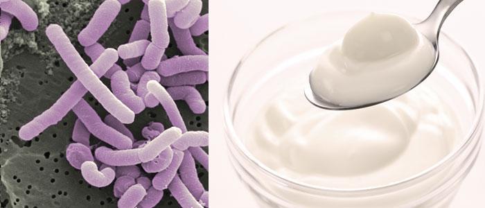 Lactobacilos Vivos: Para qué sirve Lactobacillus y Cómo Tomarlos BIEN