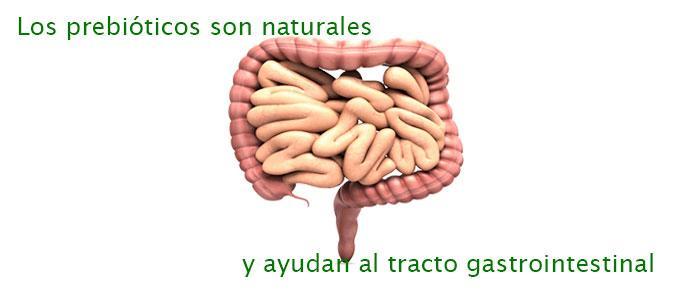 Los prebióticos naturales ayudan al tracto gastrointestinal