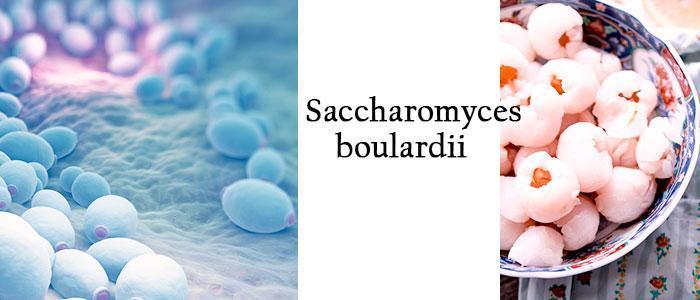 Saccharomyces boulardii para que sirve, que es
