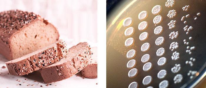 Saccharomyces spp, Levadura y Probiótico, Usos y Propiedades